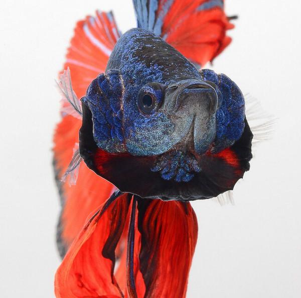 动物作品赏析 作品展示 作品展示  第13张